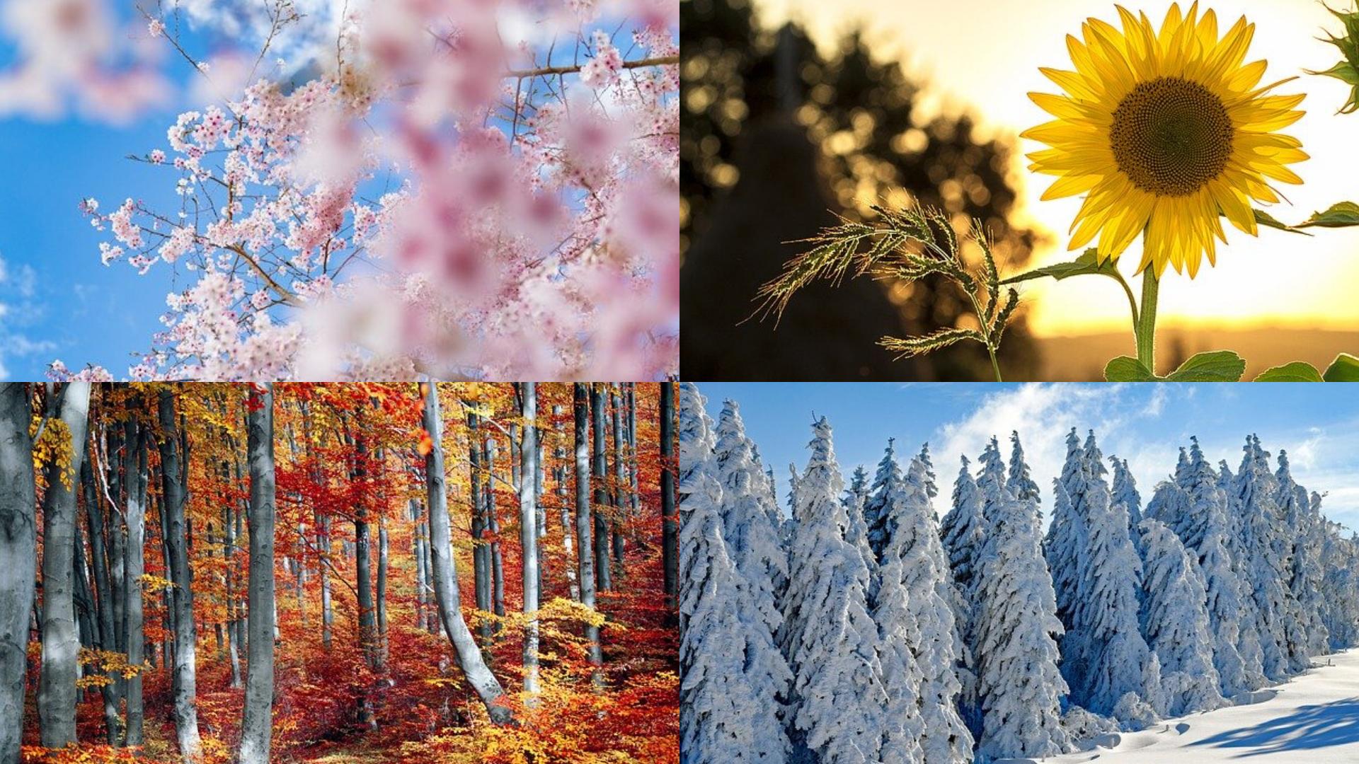 sosmisposo-stagioni